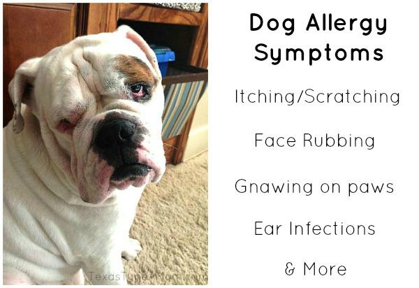 Dog Allergy Symptoms #shop #walgreensrx
