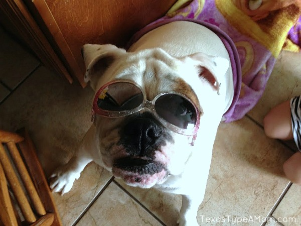 Healthy Bulldog in Sunglasses #shop #walgreensrx
